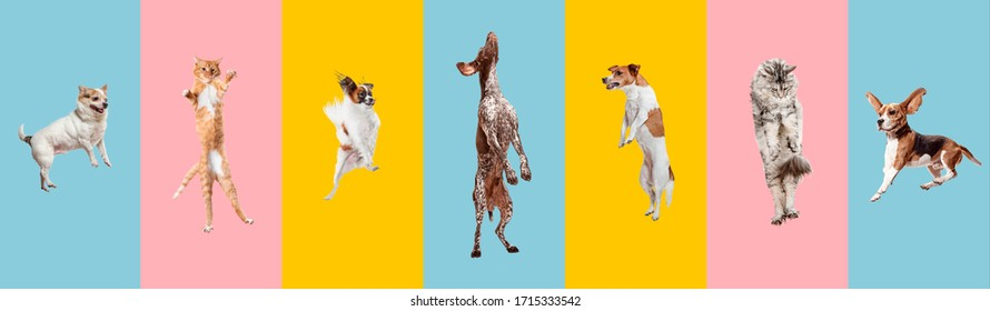 Young dogs jumping, playing, flying. Cute doggies or pets are looking happy isolated on colorful or gradient background. Studio. Creative collage of different breeds of dogs. Flyer for your ad.