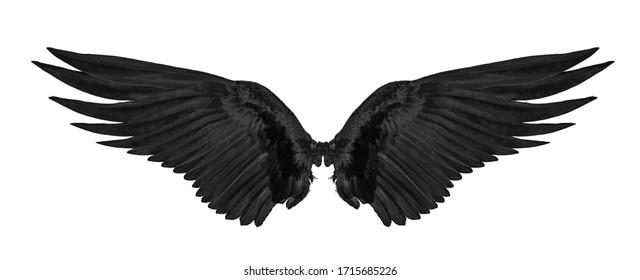 白い背景で隔離の黒い翼。