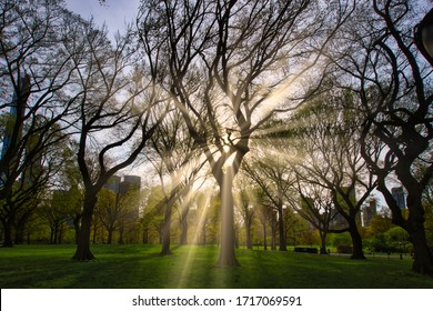 Park met zonnestralen tussen de bomen. Stedelijk gebied met wolkenkrabbers in de verte