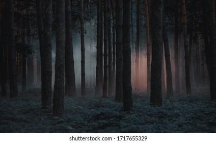 Unheimlicher Wald der dunklen nebligen Kiefer