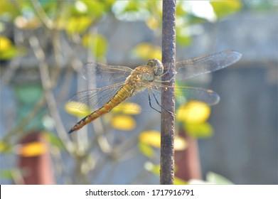 Hermosa libélula se sienta en la barra de hierro en el jardín durante el día.