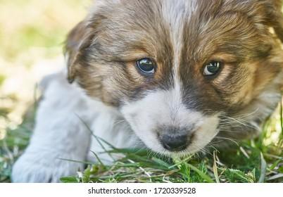 Welpe, der im grünen Gras ruht. Nahaufnahmefoto.