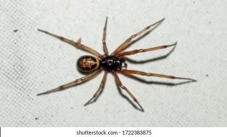 spider walking on a white floor