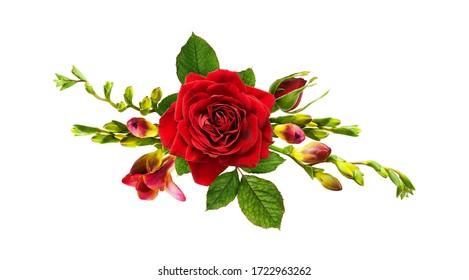 Rote Rose und rote Freesienblumen in einem Blumenarrangement lokalisiert auf Weiß