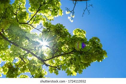 Árbol en el parque contra el cielo. El sol atraviesa las hojas. Rayos de sol en las hojas. Primavera en el parque. Hojas verdes al sol.