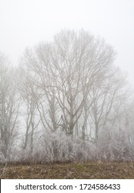 Gray depressed winter day with thick fog. Hoarfrost and frost fell on the vegetation and on the canopy of the nearby forest. A gloomy winter idyll. - Image