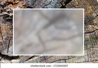Textur eines alten rissigen Baumes. Altes Holz zersägt. Platz für Text. Durchscheinender Glaseffekt