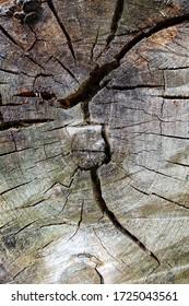 Textur eines alten rissigen Baumes. Altes Holz zersägt. Holzbeschaffenheit für Hintergrund.