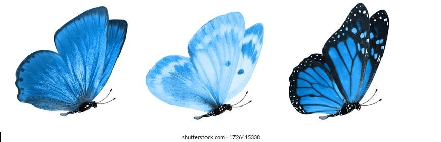 白い背景に分離された青い熱帯の蝶。デザインのための蛾
