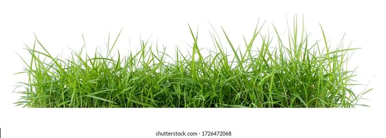 Hierba verde aislada sobre un fondo blanco