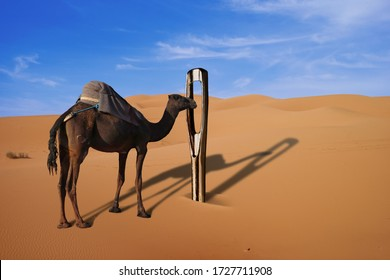 Camel and a giant needle in the desert