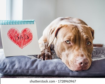 Adorable, charming puppy of chocolate color, notebook with a painted heart and the inscription DAD. Close-up, side view. Indoors. Congratulations for family, relatives, friends and colleagues