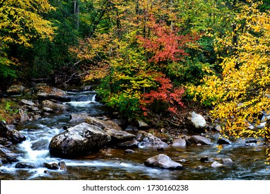 Fall color along Williams River, a rushing mountain stream known for its Trout, Monongahela National Forest, West Virginia, USA