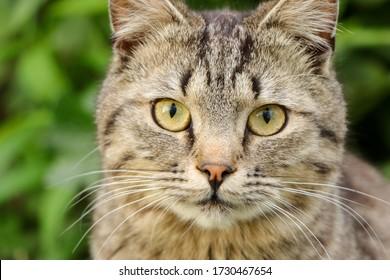 gato con ojos muy hermosos