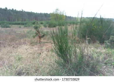 Foreground photo of a plant in an open space in bright daylight in Frankfurt forest area