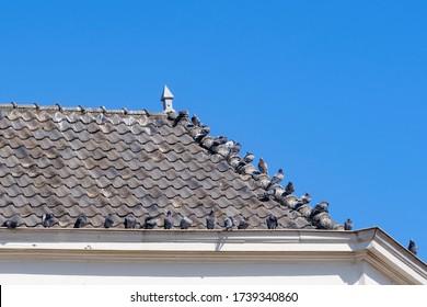ハトは、青い空を背景に、家の溝の上の灰色の屋根瓦の上に座っています。