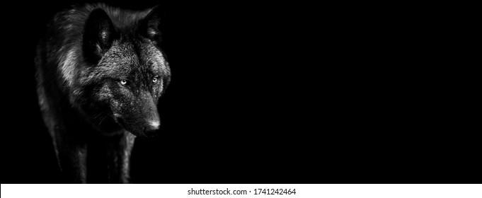 Vorlage des schwarzen Wolfes in Schwarzweiß mit schwarzem Hintergrund