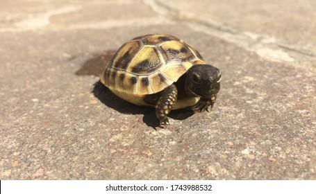 Neugeborene Baby süße Schildkröte
