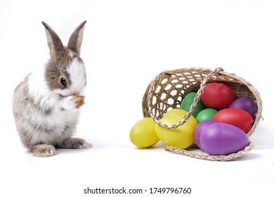 Hase oder Kaninchen und bunte Esther-Eier im Korb. Entzückendes kleines braunes Kaninchen und Esthers Eier auf weißem Hintergrund. Rabit stehend und Aktion.