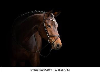 黒の背景にエレガントな馬の肖像画。暗い背景の馬。