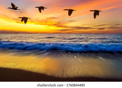 日没時に海の波の上を飛んでいる鳥の小さな群れ