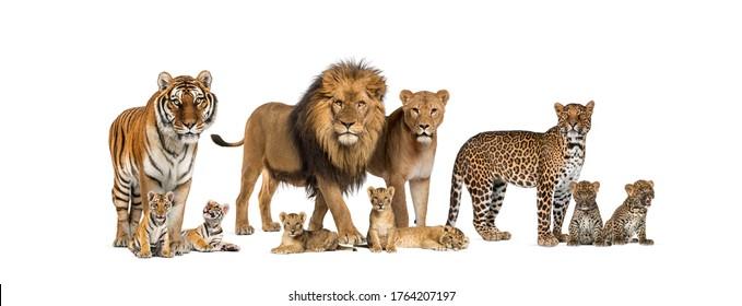 Gran grupo de muchos gatos salvajes, cachorros y adultos juntos en una fila