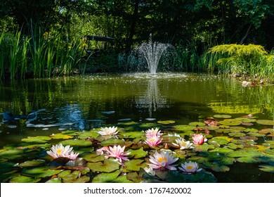 睡蓮と蓮が咲く魔法の庭の池。池には美しい滝の噴水があります。常緑樹や水生植物は水に反射します。リラックスと休息の雰囲気。