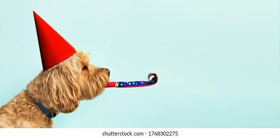 Lindo perro celebrando con sombrero rojo pary y reventón contra un fondo azul y copie el espacio al lado