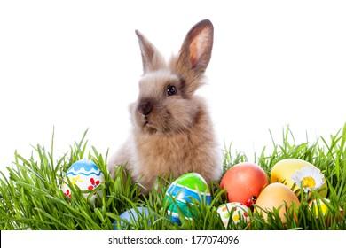 Велигденски зајаче и велигденски јајца на зелена трева