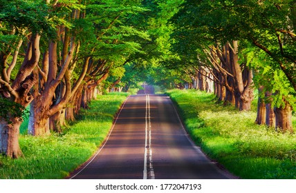 A photo of the beauty of a road between the trees in the nice summer