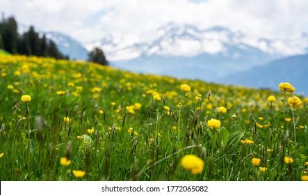 Frühlingslandschaft mit Blumenwiese und Bergen. Panoramablick auf die idyllische Berglandschaft in den Alpen mit frischen grünen Wiesen in voller Blüte an einem schönen sonnigen Tag im Frühling.