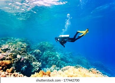 Buzo hembra nadando bajo el agua