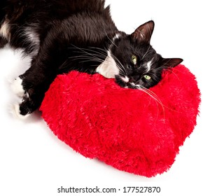 Cute black-white cat lying on the heart-formed pillow