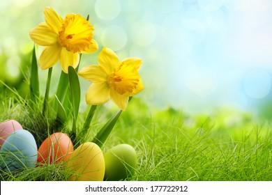 Ostereier und Narzissenblume auf Wiese