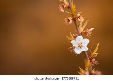 Flores blancas en tono otoñal. Hermosas flores en el telón de fondo del otoño