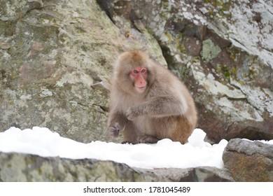 Affe Onsen in Japan Schnee