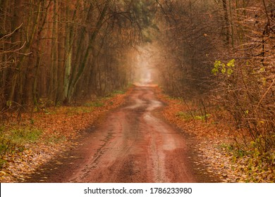 Autumn forest tunnel of love. Forest tunnel of love. Autumnal tunnel of trees and bushes. Love tunnel in autumn