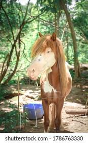 アルビノの馬の肖像画。緑のサマーパークで手綱を付けられた馬。乗馬の散歩と乗馬のコンセプト。悲しそうな目でかわいい国産ペット。