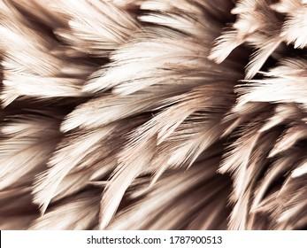 白い背景の美しい抽象的な白と茶色の羽と白いパターンと黄色の背景、羽の背景、金の羽のバナー、茶色のテクスチャの柔らかい黄色の羽のテクスチャ