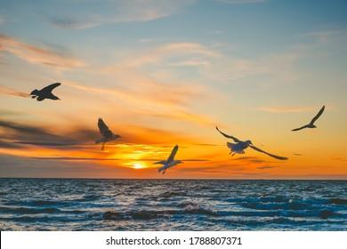 日没時に海の上を飛んでいるカモメ-コピースペースのある美しい凍った動き