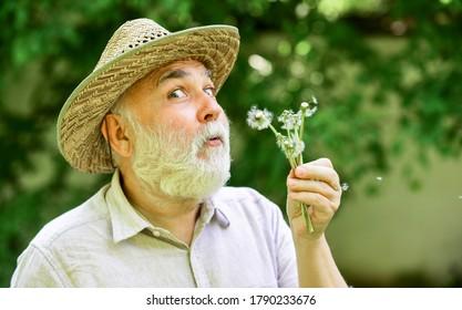 Sommerfee Porträt. glücklicher und sorgloser Ruhestand. Opa Bauer. älterer Mann blasen Löwenzahnsamen im Park. älterer Mann im Strohsommerhut. Konzept Speicherverlust. Konzept der Kahlheit und des Haarausfalls.
