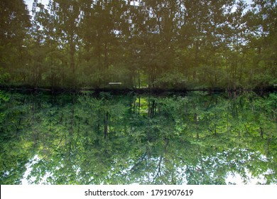 Trippy abstract image of a forest reflected in clean water. Image is flipped with water on top.