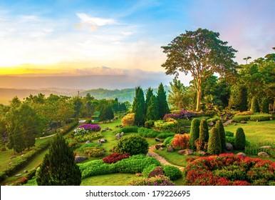 Hermoso jardín de flores de colores en la colina por la mañana