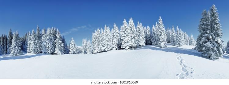 Ein Panoramablick auf die mit Frostbäumen bedeckten Schneeverwehungen. Magischer Winterwald. Naturlandschaft mit schönem Himmel. Die Wiederbelebung des Planeten.