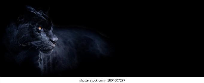 Sjabloon van een zwarte panter met een zwarte achtergrond