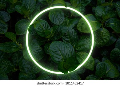 Beautiful and fresh green leaves with circle neon light.creative nature background image for seasonal use design