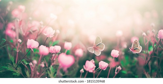 Wilde rosa Blumen gebadet im Sonnenlicht im Feld und zwei flatternden Schmetterling auf Natur im Freien, weicher selektiver Fokus, Nahaufnahmemakro. Magisches künstlerisches Bild.