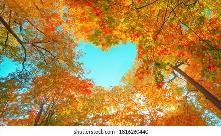 Herbst Wald Hintergrund. Lebendiger Farbbaum, rot-orangefarbenes Laub im Herbstpark. Naturänderung Gelbe Blätter in der Oktobersaison Sonne oben im blauen Herzformhimmel Sonniges Tageswetter, heller Lichtfahnenrahmen