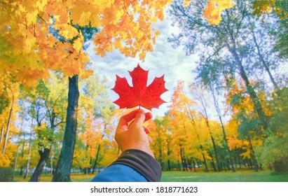 Mano que sostiene el primer rojo de la hoja del otoño. Hojas de arce en el parque. Hola concepto de octubre. La naturaleza cambia el estado de ánimo. Bosque soleado amarillo sobre fondo de color naranja. Pov ver el cielo azul. Feliz temporada del árbol de oro