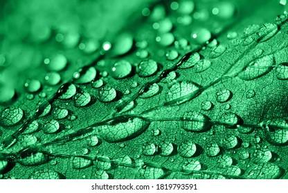 Grünes Blatt mit Wassertropfen darauf